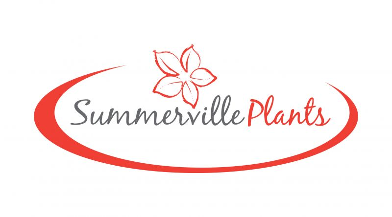 Summerville Plants